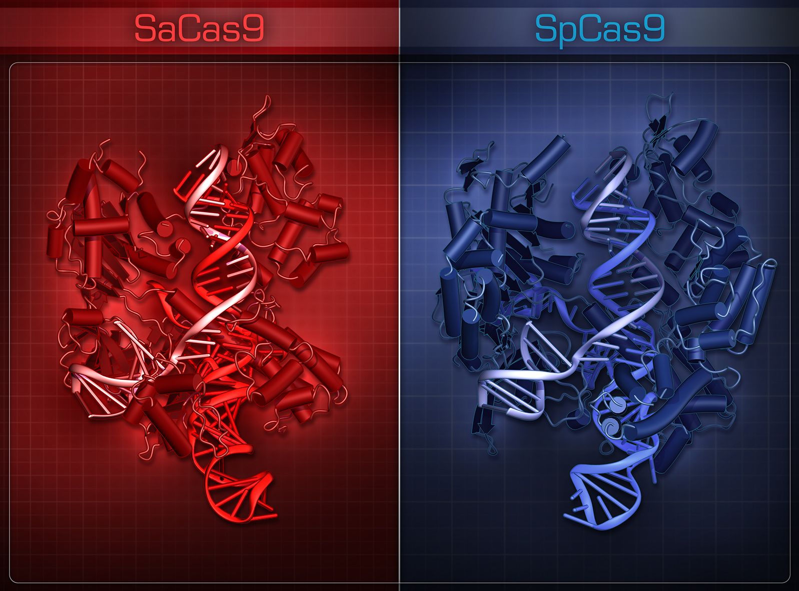 SaCas9_icon.jpg